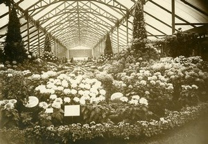 France Paris Horticultural Exhibition Chrysanthemums Greenhouse Photo Rol 1931