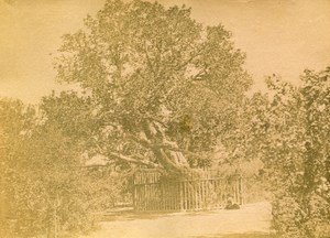 Middle East Egypt Cairo Virgin Mary's Tree Old Anonymous Albumen Photo 1880