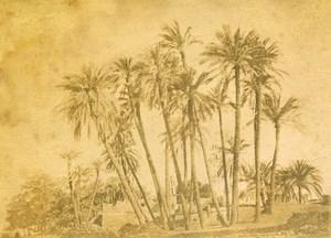 Middle East Egypt Alexandria Palm Trees Old Anonymous Albumen Photo 1880