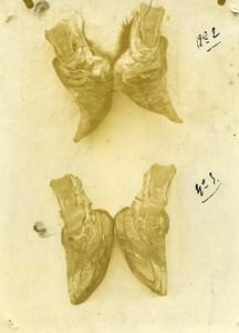 France Reims Slaughterhouse Veterinary Medecine Research Old Photo 1900