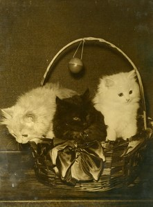 France paris Porte de Versailles Cat Show Kittens in Basket Old Press Photo 1935