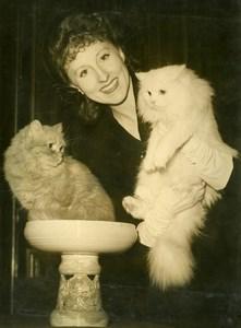 France Cat Show Miss Zobolanski & Persian Tuberculosis Charity Press Photo 1948
