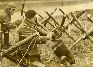 Belgium WWII Army Dog Training Estafette Liaison Old Press Photo 1939