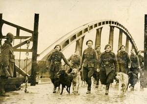 Belgium WWII Military Maneuver Liaison Dogs Old Press Photo 1939