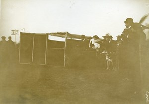 France Paris Greyhound Dog Show at Longchamps Old Photo 1910