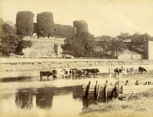 United Kingdom Wales Rhuddlan Castle Cows Countryside Old Photo Bedford 1875