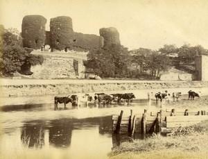 United Kingdom Wales Rhuddlan Castle Cows Countryside Old Photo Bedford 1875