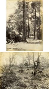 France Barbizon Fontainebleau Forest Two Old Albumen Photos Delaporte 1890