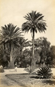 Algeria Algiers Palm Grove Alger 2 Old Photos Francis Frith 1870