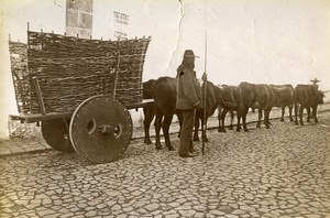 Portugal Azores Sao Miguel Ponta Delgada Ox Cart Old Photo Raposo 1890