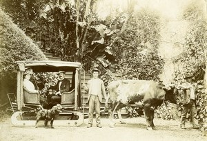 Portugal Azores Sao Miguel Oxen Bullock Cart Occupational Old Photo Raposo 1890