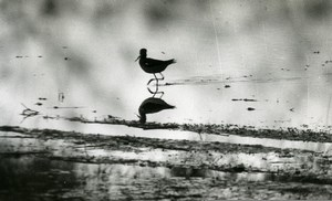 France Bird in a Pond Water Nature Amateur Wildlife Photography 1970's