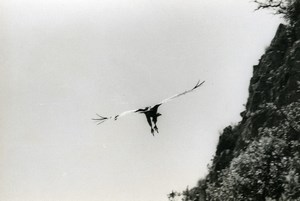 Spain Zahara Griffon Vulture Nature Amateur Wildlife Photography 1970's