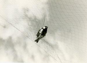 France Savoie Golese Pass Bird Amateur Wildlife Photography 1962