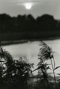 France Sunset Landscape Lake Cane Grass Nature Amateur Photography 1970's