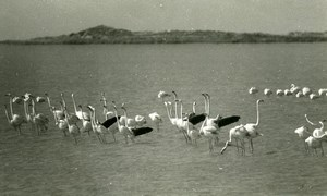 France Camargue Flamingos Nature Amateur Wildlife Photography 1970's