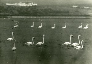 Spain Antequera Laguna Salada Flamingos Amateur Wildlife Photography 1970's
