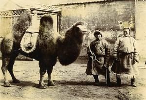Chine Pékin Beijing Chameau Omnibus Pekinois ancienne Photo 1906