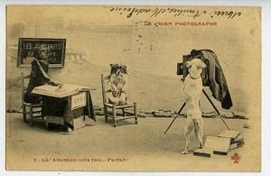 France Humoristic Postcard the Dog Photographer 1900