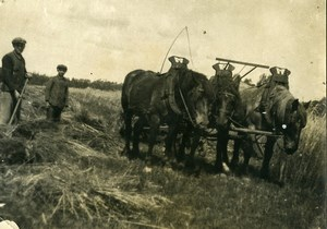 France Horses Cart Study Havest Time Old Photo 1900