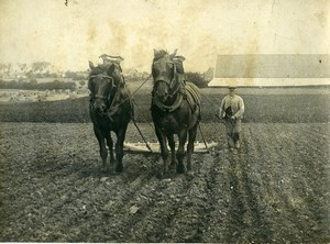 France Horses Study Farming Ploughing Old Photo 1900