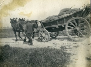 France Horses Cart Transport Study Old Photo 1900