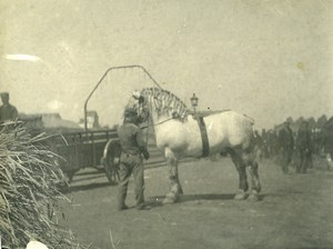 France Horses Study Countryside Old Photo 1900