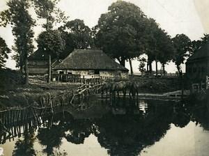 France Chevaux a la Mare Campagne Ferme ancienne Photo 1900