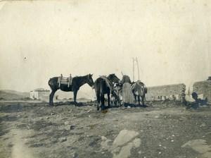 France Chevaux Vie a la Campagne ancienne Photo 1900