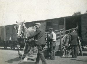 France Horses getting off a Train Old Photo 1900