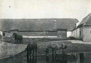 France Horses Drinking Countryside Farm Scene Old Photo 1900