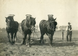 France Horses Ploughing Farming Countryside Old Photo 1900