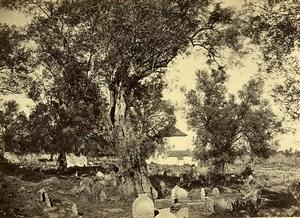 Algeria Tlemcen Sidi Bou Medine Cemetery Old Photo 1890