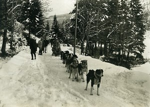 France Alsace Military Sled Dogs First World War Winter Snow WWI Old Photo 1917