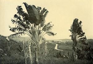 Madagascar Paysage à Lahantravy? Palmiers Ancienne Photo Ramahandry 1910'