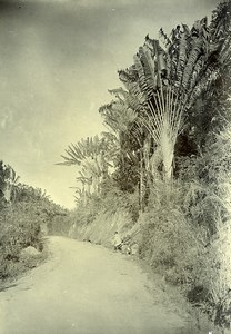 Madagascar une route carrossable Ancienne Photo Ramahandry 1910'