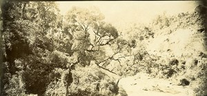 Madagascar dans la Foret de Manoraka? Ancienne Photo Ramahandry 1910'