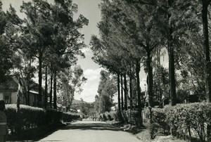 Madagascar Arivonimamo l'Avenue Ancienne Photo 1950