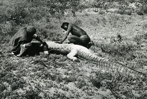 Madagascar Chasse au caiman Alligator Ancienne Photo 1950