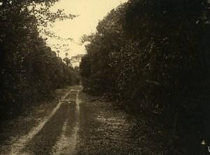 Vue poétique de Madagascar Chemin de Campagne Ancienne Photo 1937