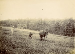 France Villers Sunday in the Countryside Man & Horses in a Field Old Photo 1900