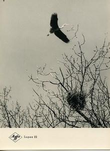 Publicité pour papier Agfa Lupex 22 Cignogne Volante Ancienne Photo 1960