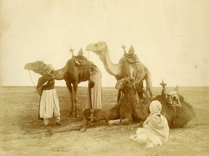 Algeria Bedouin? Camels in the Desert old Photo Bougault 1900