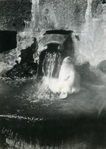 France Chaudes Aigues scouring a calf's head old Photo 1950
