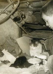 France Paris Abandoned Cat & Kitten Rue Hittorf 2CV old Photo 1962