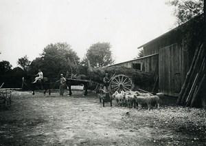 France Ile de Ré Vie paysanne Moutons Chevaux Ferme Ancienne Photo 1920