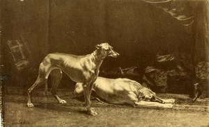 Arts Painting by Jadin Fils Greyhounds? Old Photo 1880