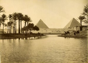 Egypt Pyramide & the Nile Camels Old Photo Arnoux 1890