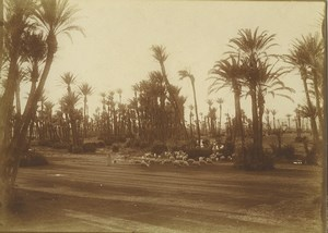 Morocco Marrakech Palmeraie Palm Grove Sheep herd Old Photo Felix 1915
