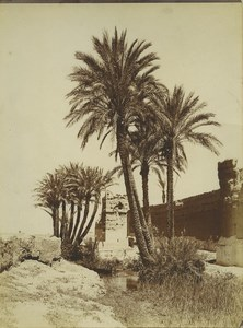 Morocco Marrakech City Wall Palm Trees Old Photo Felix 1915